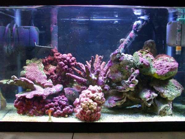 Samples Of Salt Water Reef Tanks Only At Feldman S Aquarium