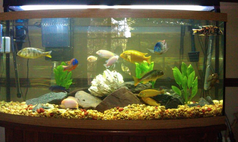 ... - Water Fish Tank Freshwater Fish Tank Fish Tank Set Up Fish Tank