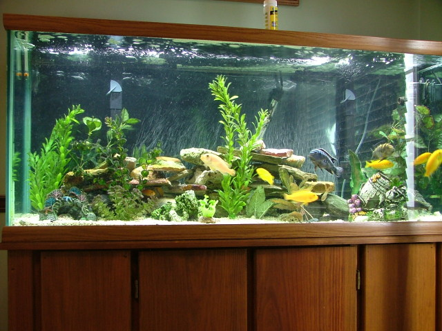 Samples of fresh water fish tanks only at feldman 39 s for How to fresh water fish